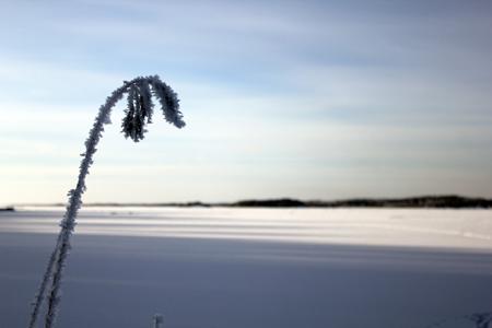 winter 4