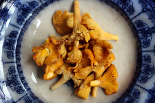 chantarelle mushrooms 1