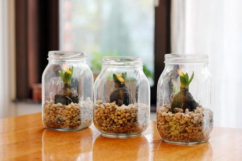 hyacinth 7