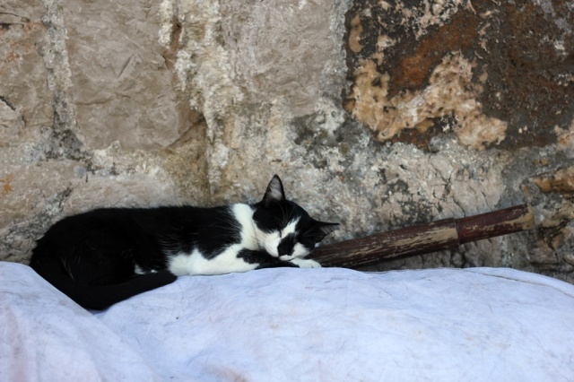 cats life 2